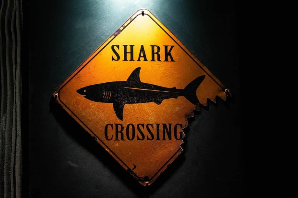 Photo of a shark crossing sign