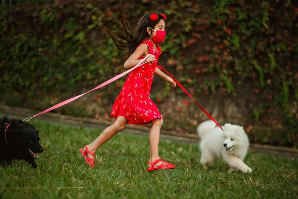 Photo of a girl walking dogs; a profitable side job