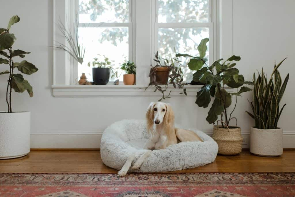 Photo of a dog lounging