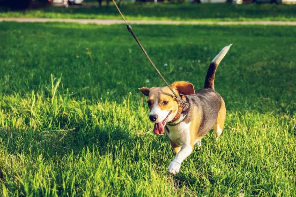 Photo of a dog being walked