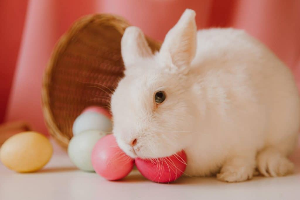 Photo of a cute rabbit; pet sitting is one of the popular Under The Table Jobs
